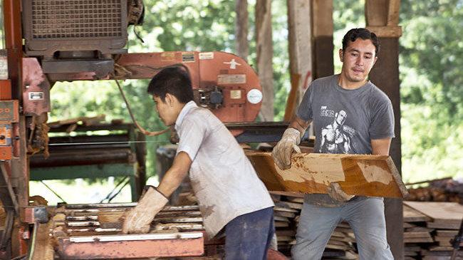 Männer bei der Arbeit in der nachhaltigen Holznutzung