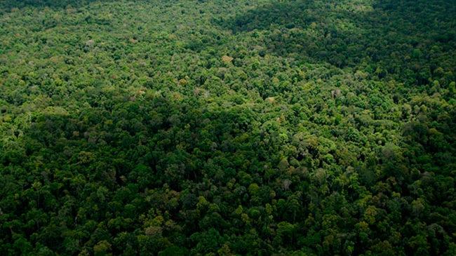 Regenwald in Guatemala