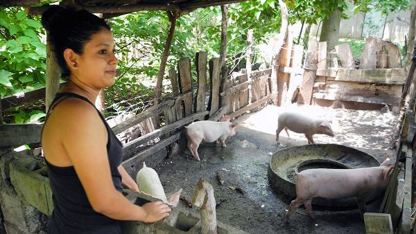 Frau guckt sich Schweinezüchtung auf einem Agrarworkshop an.