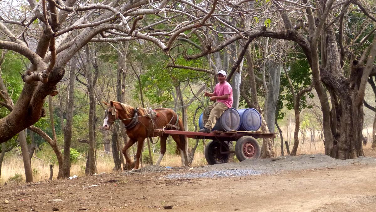 Ein Mann fährt auf einem einfachen Pferdefuhrwerk durch trockene Landschaft im Corredor Seco in Nicaragua