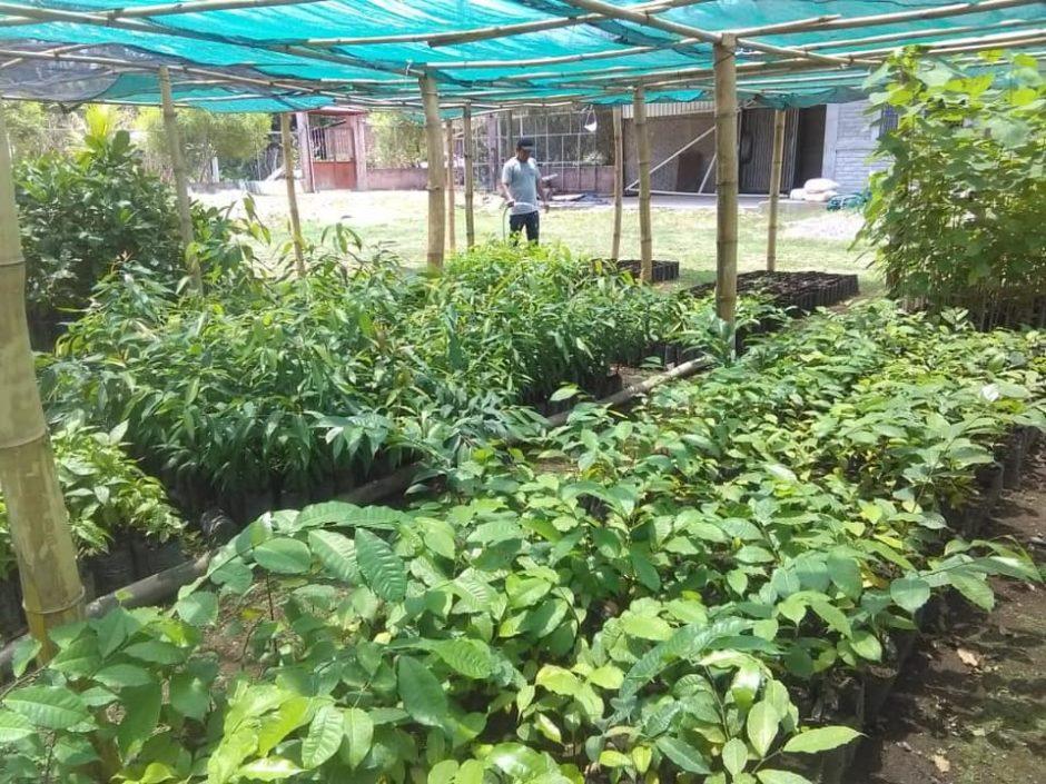 Ein Mann bewässert einen Nutzgarten
